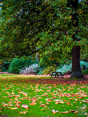 (atogdude) Tags: trees fall grass bench olympus shade zuiko driedleaves