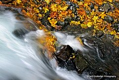 Gold Rush (Gary Grossman) Tags: autumn fall nature water leaves oregon creek gold colorful whitewater stream fallcolor natural northwest scenic fast columbia rush pacificnorthwest goldrush columbiarivergorge autumncolor rushing nationalscenicarea
