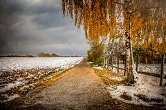 (laura_bostonthek) Tags: autumn winter snow tree landscape farm orchard firstsnow