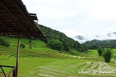 PhamonVillage-DoiInthanon-ChaengMai-Trip_By-P r i m t a a_E10886166-030