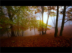Magical Forest (beppeverge) Tags: autumn trees leaves foglie alberi woods fav50 fav20 magical forests magico valsesia fav10 magicallight montetovo