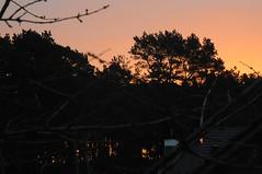 Januar Morgenrte; Lingen, Gauerbach (3) (Chironius) Tags: morgendmmerung morgengrauen  morgen morning dawn matin aube mattina alba ochtend dageraad  amanecer lingen emsland germany deutschland niedersachsen allemagne alemania germania   gegenlicht sonnenaufgang sunrise zonsopgang  morgens dmmerung silhouette
