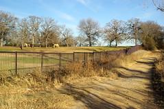 Serene Evening (pvh photo) Tags: horse fence texas pentax dfw manual manualfocus grapevine lakegrapevine dustyroad digikam k10d pentaxk10d justpentax manualprimes a35f28