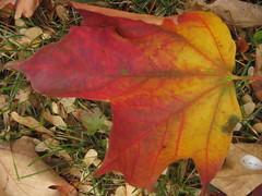 Door County Fall Foliage