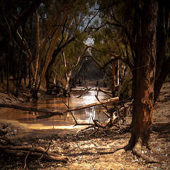 billabong in narbethong country (Fat Burns) Tags: galleryoffantasticshots rememberthatmomentlevel4 rememberthatmomentlevel1 rememberthatmomentlevel2 rememberthatmomentlevel3 rememberthatmomentlevel5 rememberthatmomentlevel6 vigilantphotographersunite vpu2 vpu3 vpu4 vpu5