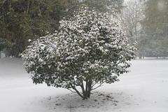 IMG_3583 - Snow