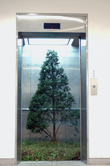 Elevator     Yew tree, Elevator, Mixed media.     Installation.      Size available