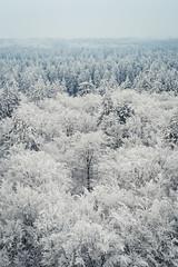 (koeb) Tags: schnee winter white snow forest wald vogelsberg bismarckturm hoherodskopf