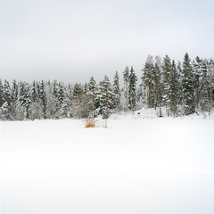 Winter (c e d e r) Tags: winter sky snow sweden minimal norwegianwood
