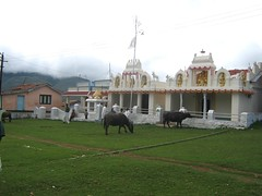 Temple and Holy Animals (Prof. Shareef) Tags: ooty nilgiris kotagiri taminadu udhagamandalam kookkal