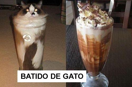 batido_de_gato