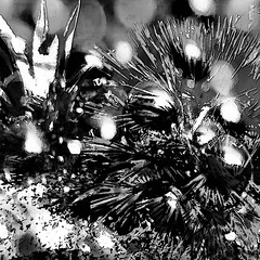 Jungle Fever (abstractartangel77) Tags: blackandwhite plants photomanipulation jungle junglefever vividimagination artdigital shockofthenew awardtree netartii