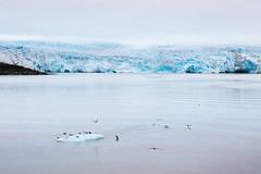 Ice (danielfoster437) Tags: noordpool coldclimate opwarmingvandeaarde koudeklimaat poolcirkel globalwarming arcticcircle fliehendengletscher antarctic klimaatverandering klima terugwijkendegletsjer gletscher climatechange zeeijs arctic arktis koudweer meltingglaciers meereis schmelzendergletscher meltingglacier smeltendegletsjer ice ijs glacier coldweather polarkreis dieglobaleerwrmung climate gletsjer klimawandel recedingglacier klte klimaat seaice eis kaltesklima