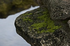 A rolling stone gathers none (Pejasar) Tags: stone rock moss green cypressspringsranch texas