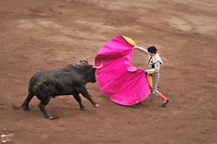 Plaza de toros Vista Alegre de Bilbao (Manuel Boado) Tags: toros animal toreo feria bilbao torero