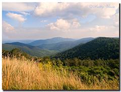 Shenandoah National Park - Virginia (Betty Vlasiu) Tags: shenandoah national park virginia nature wildlife