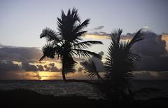 Dominican dawn Punta Cana (Alaric Webster) Tags: dominican republic punta cana dawn
