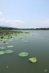 @ Taitung, Taiwan  (Jia  ) Tags:          taiwan taitung sky pond pool blue green lotus plant water landscape view
