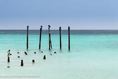 Aruba - One Happy Island 2016 (https://www.eusphotography.com/) Tags: nikon nikond610 nikon24120mm aruba island eiland colors kleuren tropical tropisch beach stand summer zomer cariben caribbean 2016
