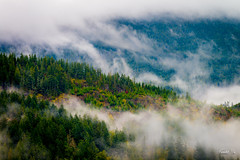 Cloud forest  (T.ye) Tags: cloud forest landscape green todd ye mist clouds outside outdoor mountain     autumn yellow bc sunshine coast canada