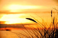 ...at last..! (lux/us) Tags: nikon d60 detail dusk bokeh silhouette composition sky sigma177028 sun sunset denmark dnemark colors farben meer sea nordsee northsea bjerregard coast kste travel reise sonne sonnenuntergang natur nature licht light landschaft landscape