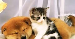 Dog & Cat Amazing Friendship! via http://ift.tt/29KELz0 (dozhub) Tags: cat kitty kitten cute funny aww adorable cats