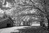 Out Behind The Barn, Infrared (John C. House) Tags: everydaymiracles nik nikon monochrome d70s johnchouse tennessee farm trees blackandwhite barn infrared