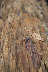 IMG_8297 (awebbMHAcad) Tags: abstract pattern texture tree trees wood log damp trunk treetrunk