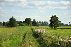 summer meadows (JoannaRB2009) Tags: summer meadow path green tree trees road clouds sky grass dolinaneru dzkie lodzkie polska poland
