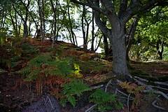 1331-17L (Lozarithm) Tags: arne rspb dorset landscape treesshrubs k1 55300 hdpda55300mmf458edwr
