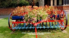 Antique seed drill with flowers near bus station 24th September 2016 001 (D@viD_2.011) Tags: antique seed drill with flowers near bus station 24th september 2016