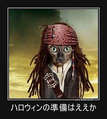 ハロウィンの準備はええか #猫 #ハロイン (Demochi.Net) Tags: life cute sexy japan fun japanese motivator culture 日本 ペット 猫 demotivator 金 家族 結婚 ゲイ 女 子供 おっぱい 愛犬 政治 社会 巨乳 文化 眼鏡 教育 demotivators 経済 女性 初恋 r18 女子 カップル 子猫 女装 お笑い motivators 会社 少子化 企業 ユーモア 恋 悪い 格差 風刺 一言 デモチ 大喜利