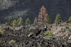 Dead Tree on the Hill (Kenneth David Geiger (aka Ken Foto)) Tags: volcano lava sunsetcraternationalmonument