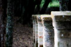 Ancient stone (losacchi) Tags: wood brazil nature stone brasil forest canon fence dark construction ancient woods glow saopaulo pillar sludge darkwood toten ibiuna veleiros ancientstone flickaward flickraward5