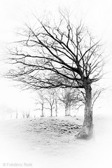 Arbres d'Hiver (Chambres Noires) Tags: bw france tree noiretblanc hiver nb arbre nordpasdecalais blanc 2012 arras saison chambresnoiresfr frdricrol