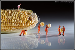 Harvesting the corn (Pikebubbles) Tags: toy toys miniatures miniature corn plastic figurines 365 smallworld 366 toyart flickraward davidgilliver flickraward5