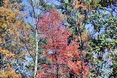 The beauty of fall (howardj47) Tags: canon howardj