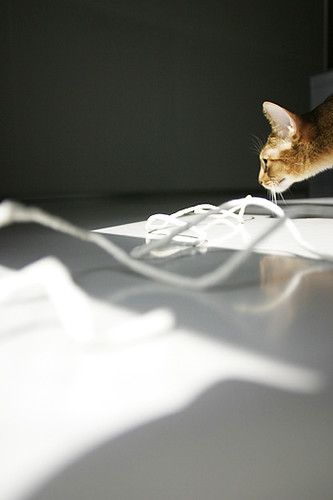 Afternoon light_cat_5241