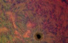 Sun_2012-10-19_12-44_UT_3c (Admiral_M) Tags: sun 3color halpha ls60tha