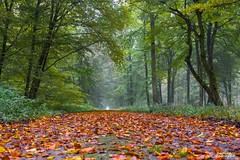 Octobre 2012 : Foret d'Hesdin  - Steve.© -