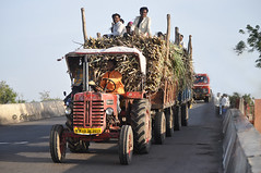 Joy ride!!! (Jehane*) Tags: people india tractor nikon village cart load 2012 sugarcane jehane kedgaon maharashtrastate nikond5000 jehanephotography kedgaonahmednagar