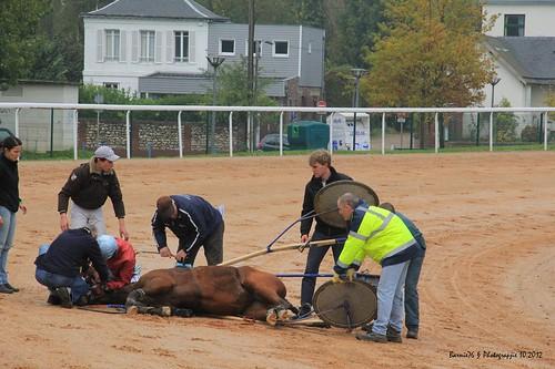 Ce cheval ne fera pas parti de votre prochain pronostic PMU