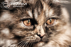 """IMG_7333 (""""Timam"""") Tags:"""