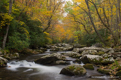 Little River (Dan Sherman) Tags: autumn trees color fall water leaves river nationalpark rocks fallcolor unitedstates tennessee gatlinburg smokymountains greatsmokymountains greatsmokymountainsnationalpark elkmont