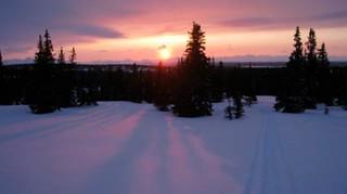 Alaska Moose and Bear Hunt - Dillingham 15