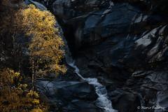 L'oro e l'argento. (Paderno Marco) Tags: canon val marco autunno 70200 paderno cascata gondo vaira 5d2
