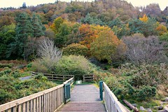 "Autumn in Wicklow . (""""Irene"""") Tags: wood bridge autumn trees ireland red wild cold green nature water beauty yellow rural river grey countryside ancient woods october gate colours hiking gates path fences glendalough trail walkway cannon boardwalk wicklow autumnal naturepark allrightsreserved glacialvalley startofwinter monasticcity eos550d theinspirationgroup irenecartonsphotography"