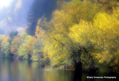 Mystical Autumn Rain (Gary Grossman) Tags: autumn reflection fall wet water rain oregon landscape colorful fallcolor pacific northwest calm ethereal pacificnorthwest reflective mystical gorge multnomah columbiarivergorge autumncolor nationalscenicarea bestcapturesaoi elitegalleryaoi mygearandme mygearandmepremium mygearandmebronze mygearandmesilver mygearandmegold mygearandmeplatinum mygearandmediamond flickrsfinestimages1