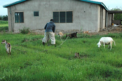 Sandema (MadisonBoratto) Tags: africa building farm goat ghana farmer operation groundswell sandema