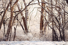 it's been fun goal. (Anna Liz Photography) Tags: winter snow fence goal bokeh 50mmf18 canont3 annalizphotography
